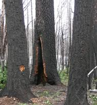 Burnt Timber